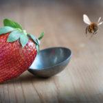 Bienenhonig vegan oder nicht