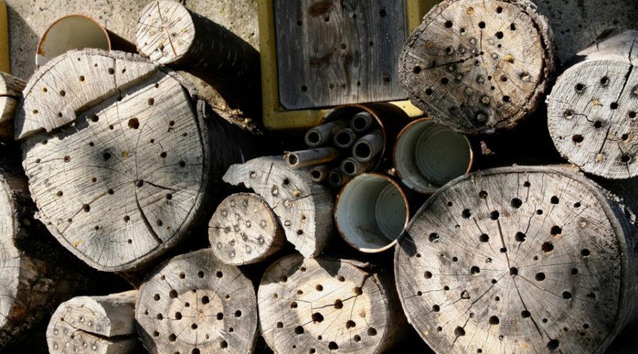 Stämme mit Löcher als Bienenhaus nutzen