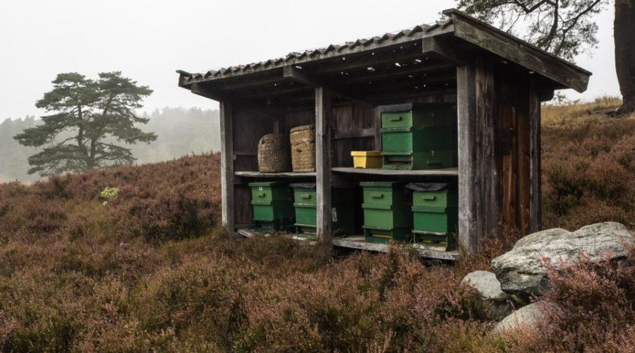 Bienen Anfänger Set