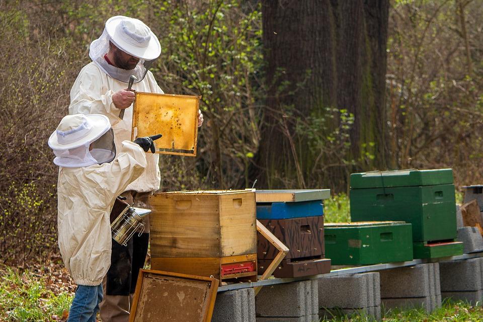 Bienen Anfänger Set für Imker