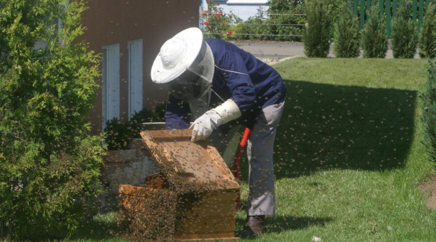 Bienen aus der Hauswand endgültig entfernen