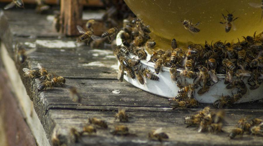 Bienen im Dach - was tun?