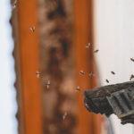 Bienen in der Hauswand entfernen ist keine leichte Aufgabe