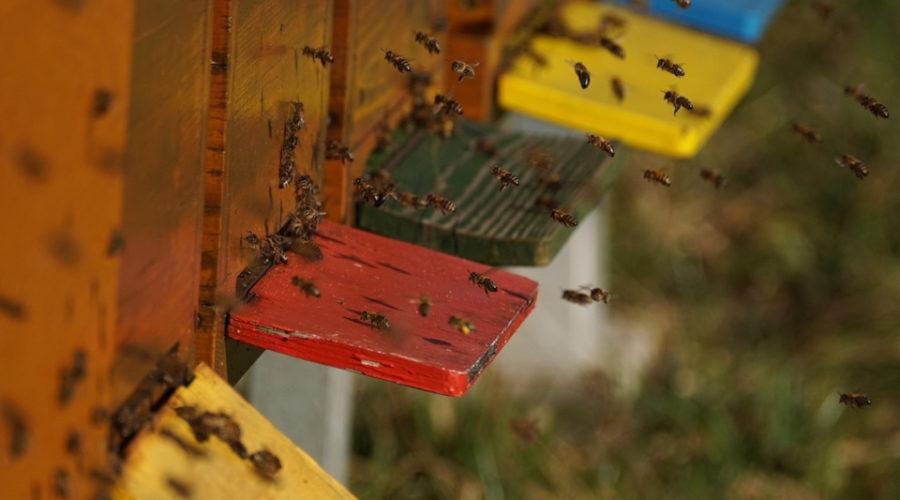 Es gibt verschiedene Bienenflucht Arten