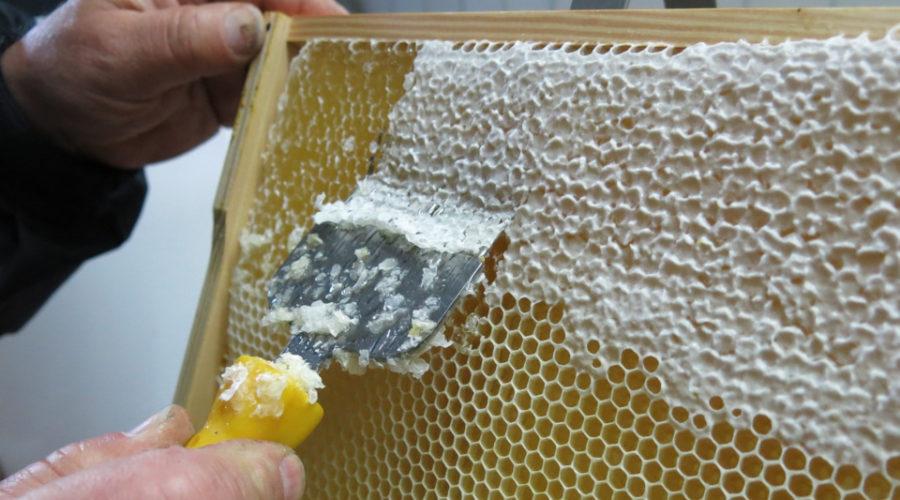 Ernte von Honig, der nicht vegan ist