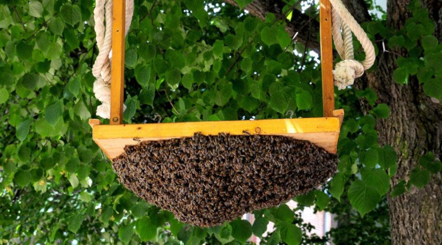 Bienenschwarm anlocken mit einer Schwarmfalle