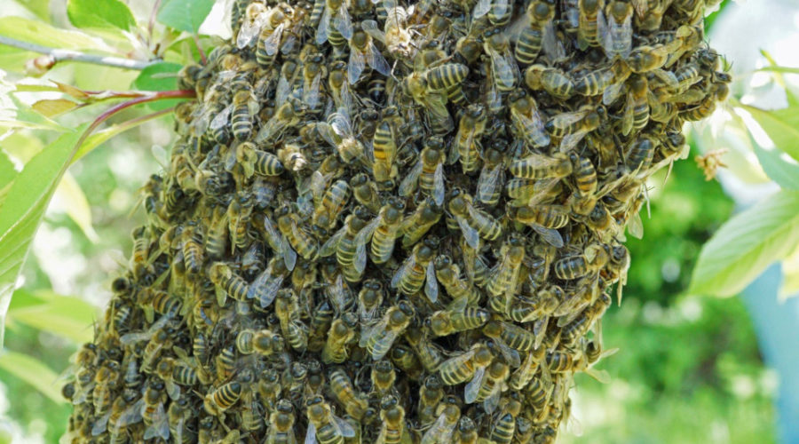 Eine natürliche Bienenstockheizung
