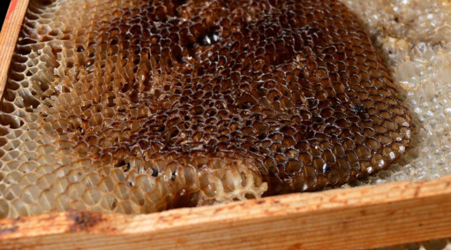 Dunkler Honig aus dunkler Wabe