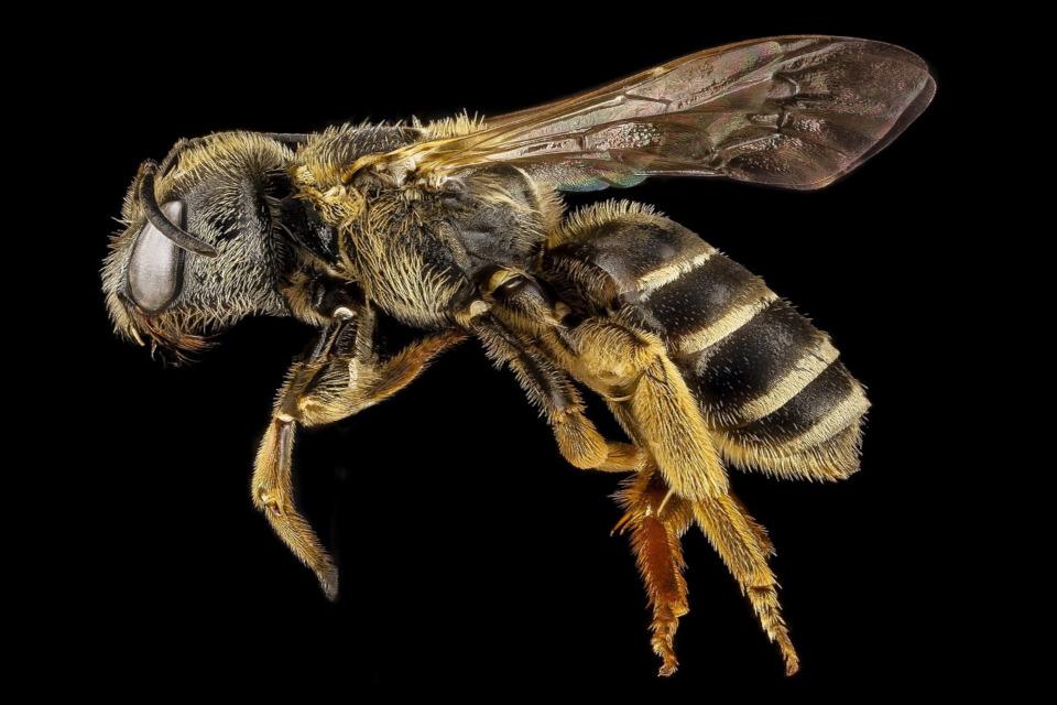Was Bienen nicht mögen