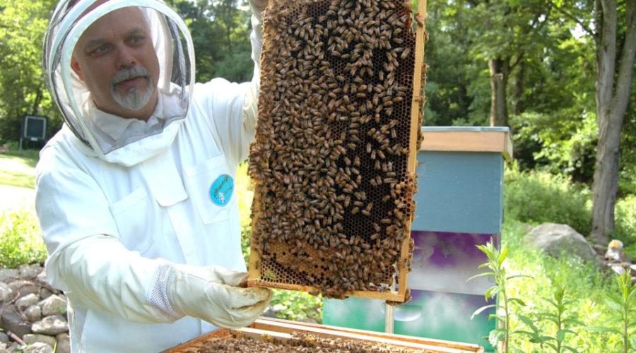 Imker mögen Bienen und umgekehrt