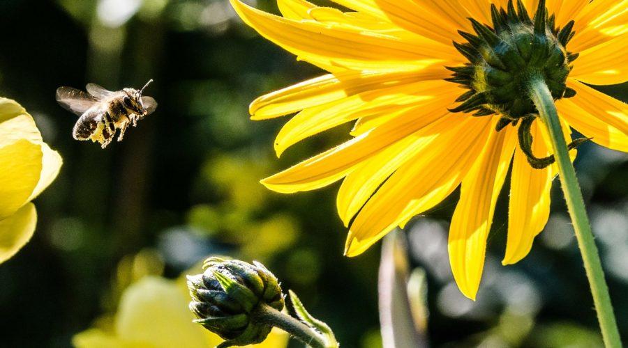Bienengift kaufen