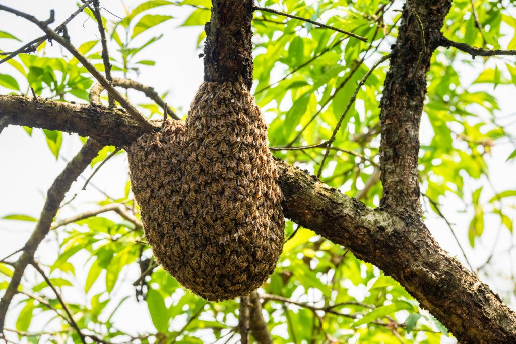 Bienen sind für Umwelt und Natur extrem wichtig.