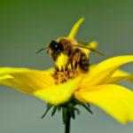 Bunte Blumen im Garten sind ideal für Bienen geeignet.