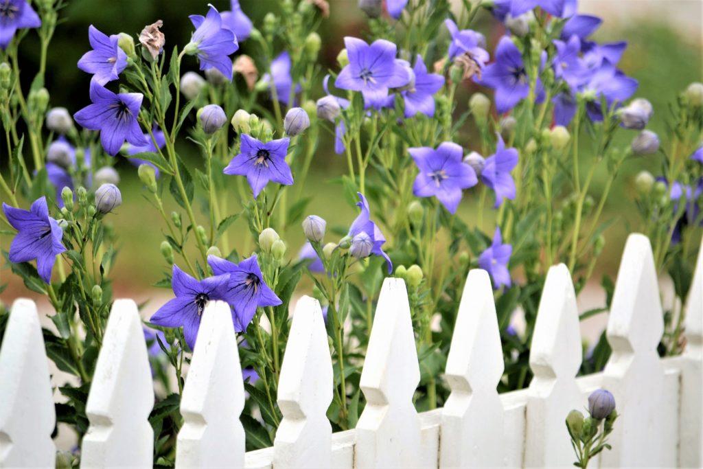 Mit einem naturbelassenen Gartenzaun tun Gartenfreunde auch den Bienen etwas Gutes.